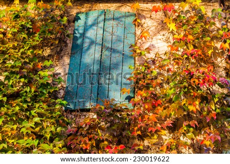 Red, green and orange leaves of a Boston ivy or parthenocissus tricuspidata veitchii  in autumn framing and surrounding an old grunge window in a tipical farmer house in Italian countryside - stock photo
