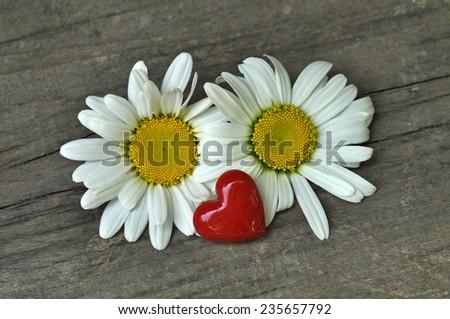 Red heart and daisy - stock photo