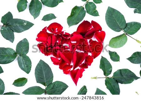 Red heart from the rose leaves in white background - stock photo