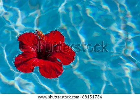 Red hibiscus flower floating in water - stock photo