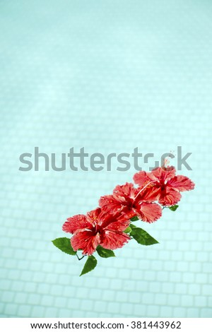 Red hibiscus that floated in the pool-3 - stock photo