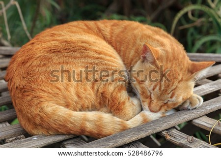 Red homeless cat sleeping on planking