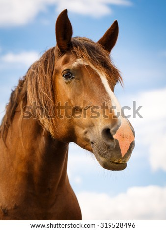 red horse - stock photo