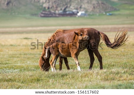 Red horse and foal on pasture - stock photo