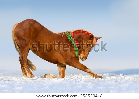 Red horse do trick  in the decorated Christmas wreath - stock photo