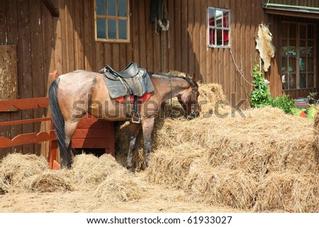 red horse eats hay. The American ranch. - stock photo