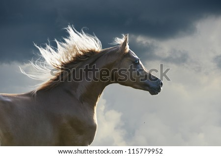 Red horse on the dark sky background - stock photo