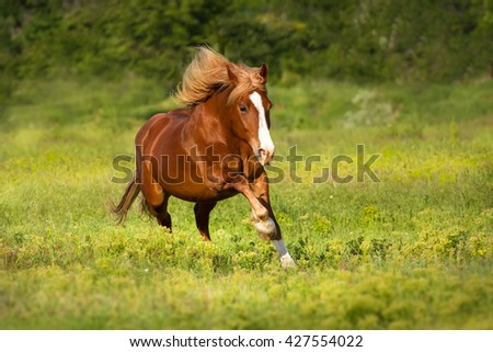Red horse run gallop on green grass - stock photo