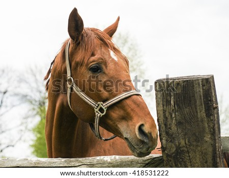 red horse standing in paddock next to a wooden fence