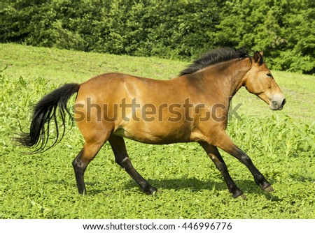 red horse with a black mane and tail running in a field on the green grass