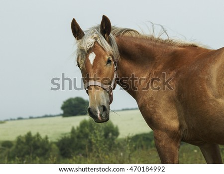 red horse with a long  mane are standing in green grass