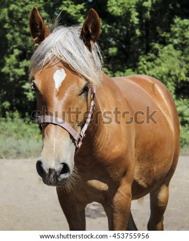 red horse with a white blaze on the head and white mane standing against a background of green trees