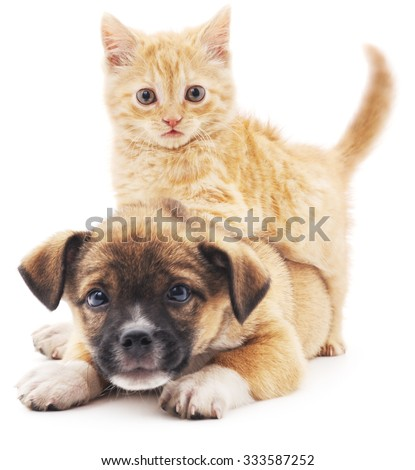 Red kitten and puppy isolated on a white background. - stock photo