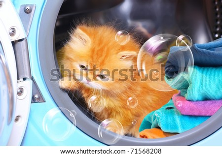 Red kitten and soap bubbles in open washing machine. - stock photo