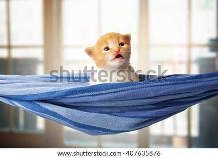 Red kitten in a hammock. Surprised Cute orange kitten in a blue hammock having rest, relax at windows background. Adorable sad pet. Small heartwarming kitten. Little cat. Animal isolated. High key - stock photo