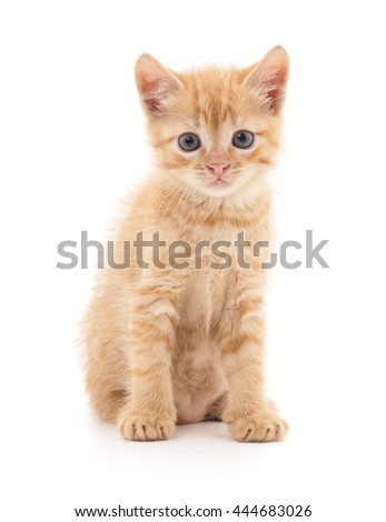 Red kitten isolated on a white background.