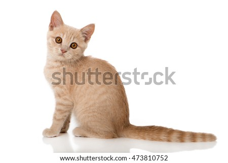 Red kitten isolated on white