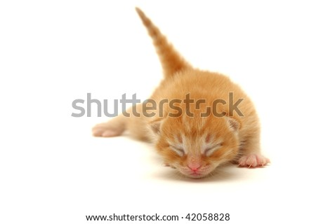 Red Kitten on the floor isolated on white background - stock photo