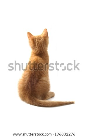 Red kitten sitting and waiting isolated over white