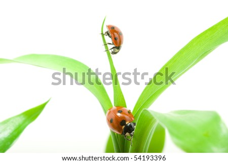 red ladybug on green grass isolated on white - stock photo
