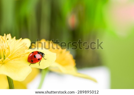 red ladybug on yellow flower. studio shot - stock photo