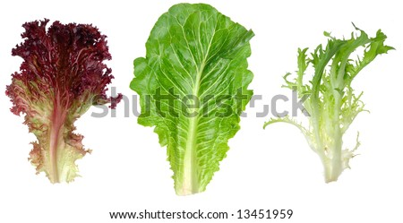 Red leaf lettuce, romaine and endive leaf isolated on white - stock photo