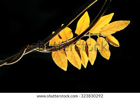 red leaf on a dark background - stock photo