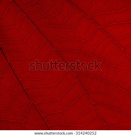 red leaf texture ( bauhinia purpurea leaf )