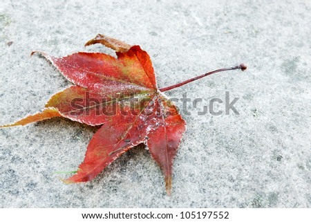 Red leaf with bits of frost on a grey stone - stock photo