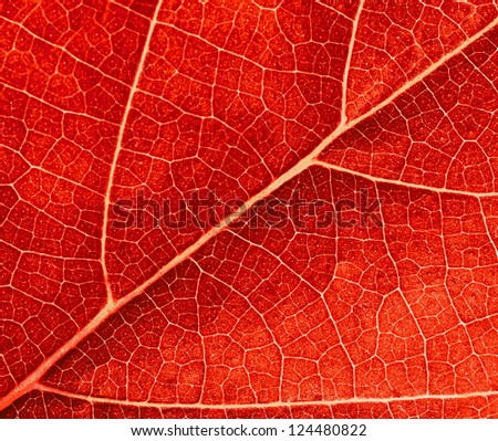 red leave texture - stock photo