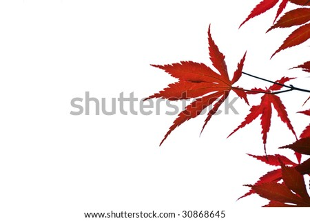 red leaves background - stock photo