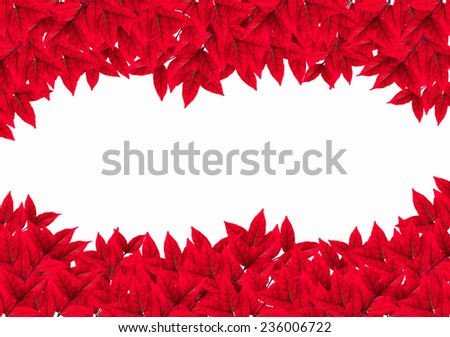 red leaves frame isolated on white background