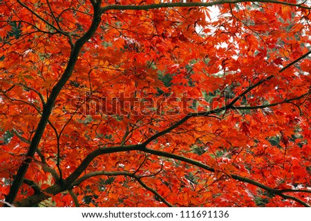 Red leaves in the park with autumn - stock photo