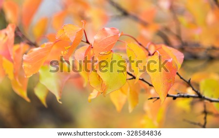 red leaves on a tree in autumn