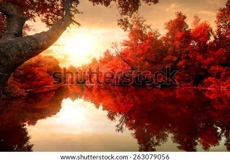 Red leaves on trees along the river in autumn - stock photo