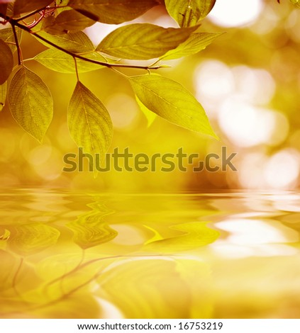 red leaves reflecting in the water, shallow focus - stock photo