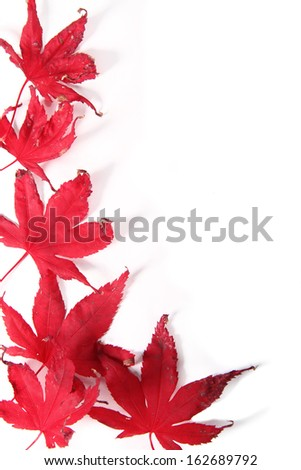 red leaves withering with the change of season