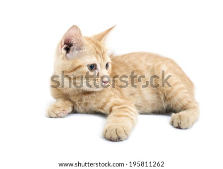 Red little kitten on a white background.