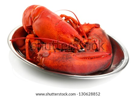 Red lobster on tray, isolated on white - stock photo