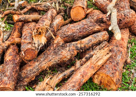 Red logs of wood stacked and ready for selling or other usage - stock photo