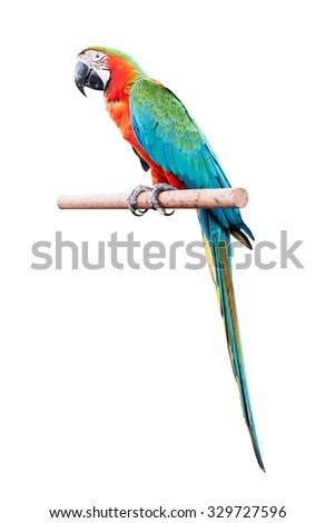 red macaw isolated on white background - stock photo