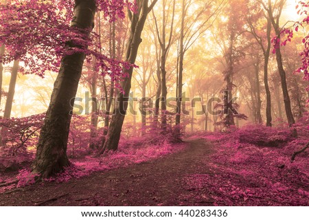 Red magic leaves in fairy tale forest