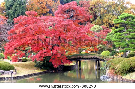 Red maple and bridge - stock photo