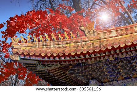 Red maple and roof of Forbidden city in Beijing - stock photo