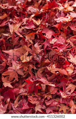 Red maple falling leaves on the earth background. Also available in horizontal format. - stock photo