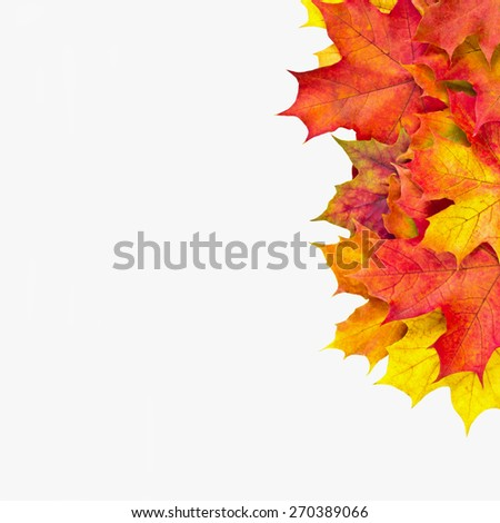 red maple leaves on a white background - stock photo