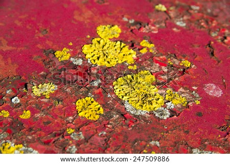Red metal with peeling paint and growing yellow fungus, shallow depth of field - stock photo