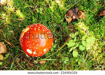 Red mushroom growing between green moss - stock photo