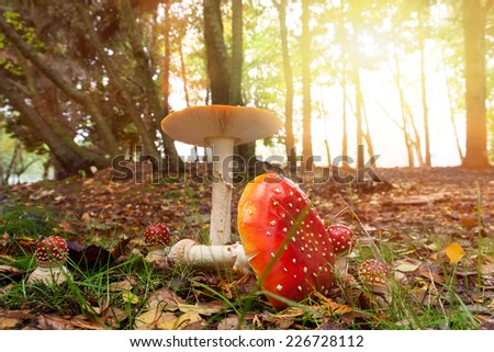 Red Mushroom in the Woods - stock photo