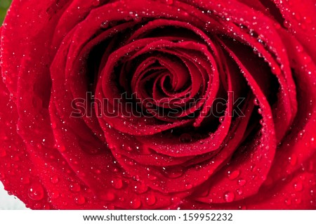 Red natural rose background